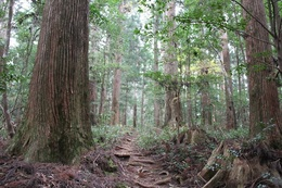 Forest_photo___