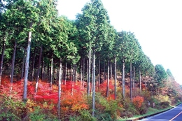 Forest_photo____
