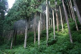 Forest_photo__________